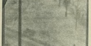"""Wróble na zdjęciu Michała C., """"Przekrój"""", 1964, nr 980 (19 I), s. 5"""